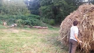 PEGAS - Видео - видео 3